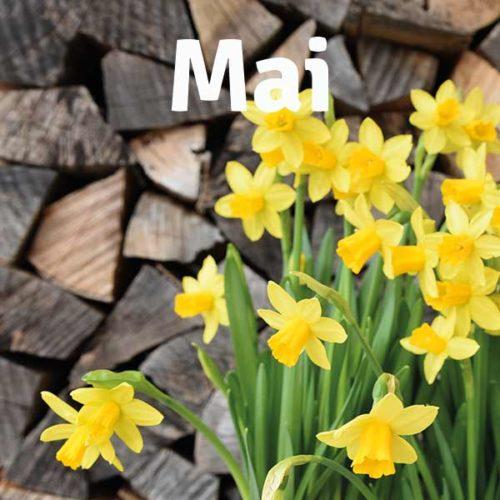fit_in_den_fruehling_mai