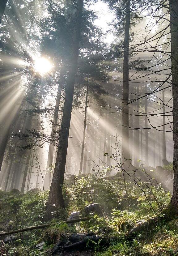Spaziergang durch die Wälder